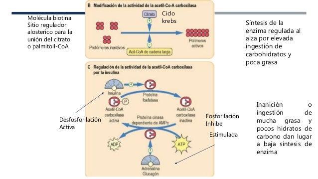 Más en metabolismo de hidratos de carbono