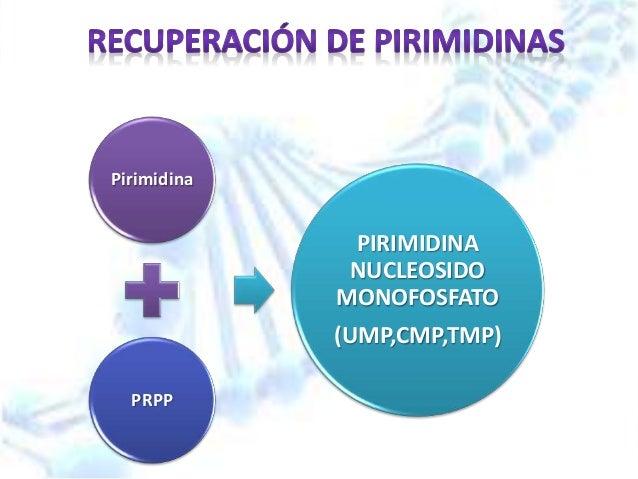 el pulpo para el acido urico como reducir los niveles de acido urico remedio natural para bajar la gota