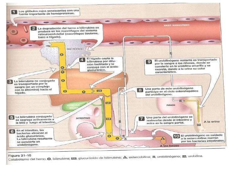 Metabolismo de proteinas 5