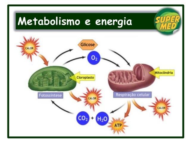 Metabolismo e energia