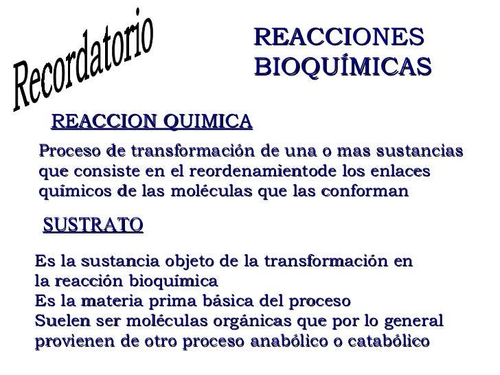 define catabolico y anabolico