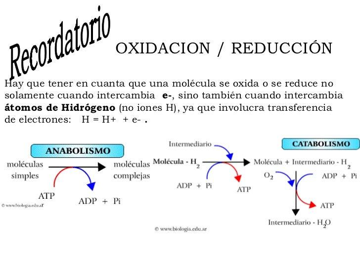 Metabolismo energetico for Que significa molecula