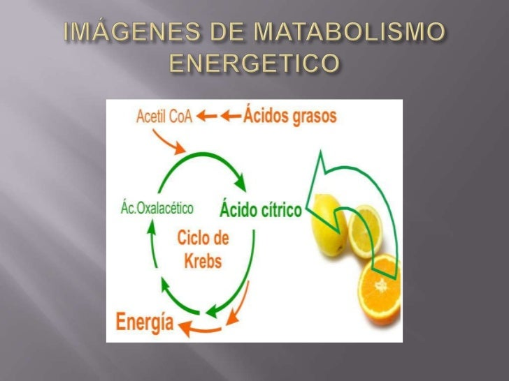 Metabolismo Basal Estandar