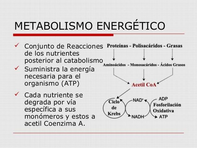 El nacimiento de Metabolismo basale