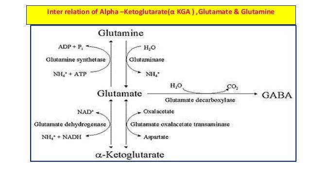 gaba glutamate relationship questions