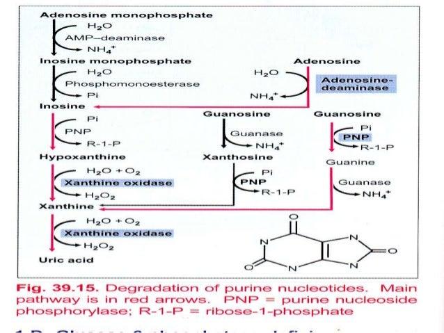 Uric Acid Pathway Metabolism of nucleoti...