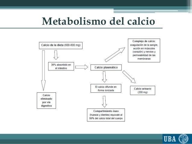 recetas metabolismo acelerado seguir en este camino