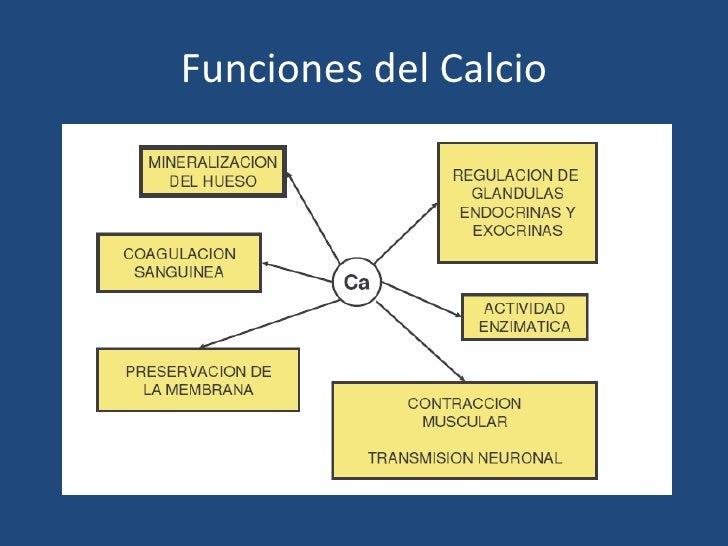 Metabolismo Fosforo Calcio