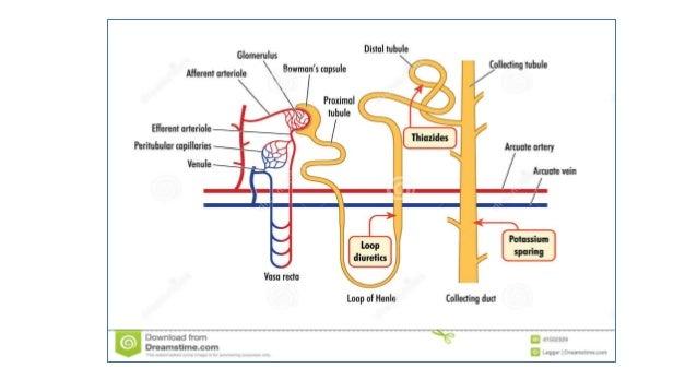 Cum să nu metabolism ficat