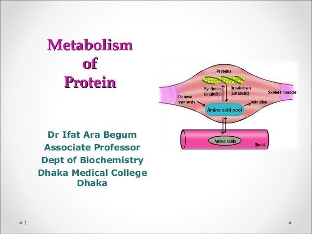 MetabolismMetabolism ofof ProteinProtein Dr Ifat Ara Begum Associate Professor Dept of Biochemistry Dhaka Medical College ...
