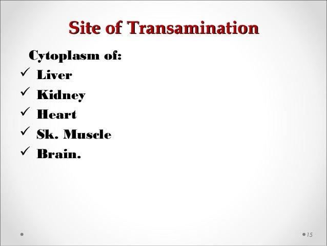 Site of TransaminationSite of Transamination 15 Cytoplasm of:  Liver  Kidney  Heart  Sk. Muscle  Brain.