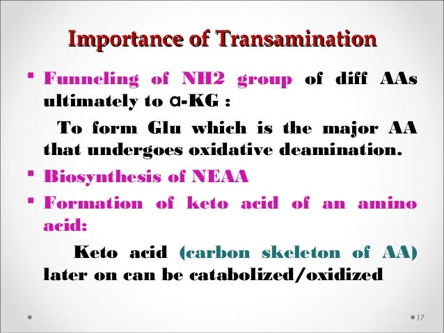 Importance of TransaminationImportance of Transamination 17  Funneling of NH2 group of diff AAs ultimately to α-KG : To f...