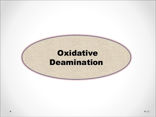 19 Oxidative Deamination