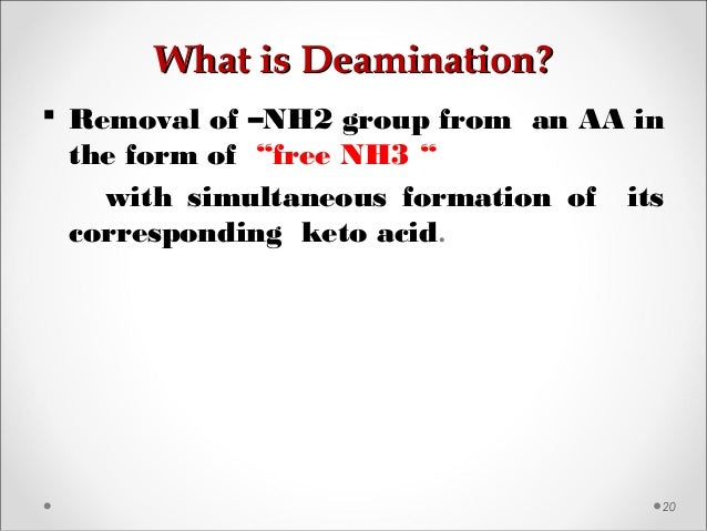 """What is Deamination?What is Deamination? 20  Removal of –NH2 group from an AA in the form of """"free NH3 """" with simultaneou..."""