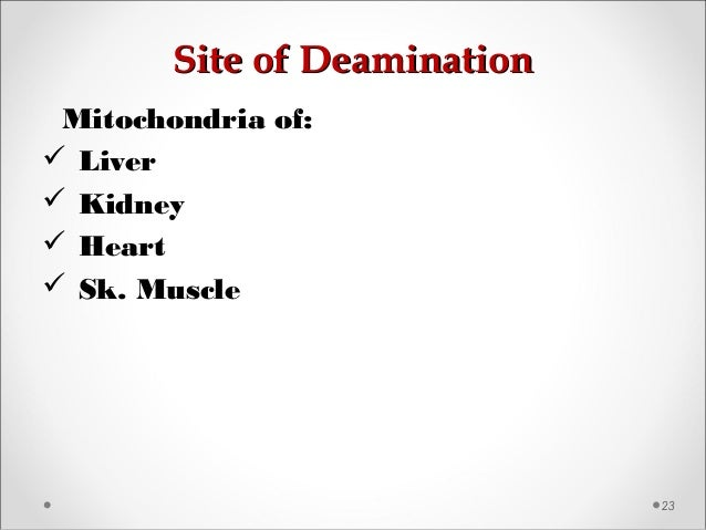 Site of DeaminationSite of Deamination 23 Mitochondria of:  Liver  Kidney  Heart  Sk. Muscle