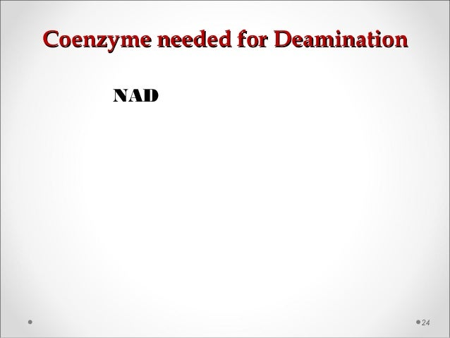 Coenzyme needed for DeaminationCoenzyme needed for Deamination 24 NAD