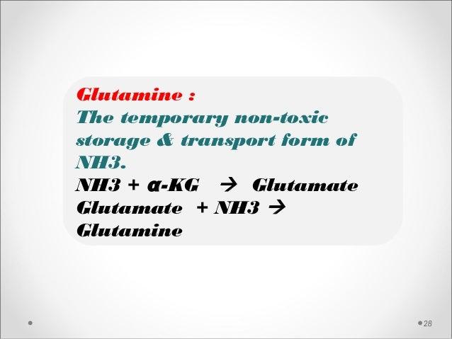 28 Glutamine : The temporary non-toxic storage & transport form of NH3. NH3 + α-KG  Glutamate Glutamate + NH3  Glutamine