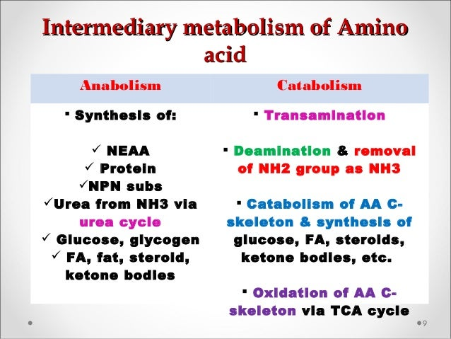 Intermediary metabolism of AminoIntermediary metabolism of Amino acidacid 9 Anabolism Catabolism  Synthesis of:  NEAA  ...