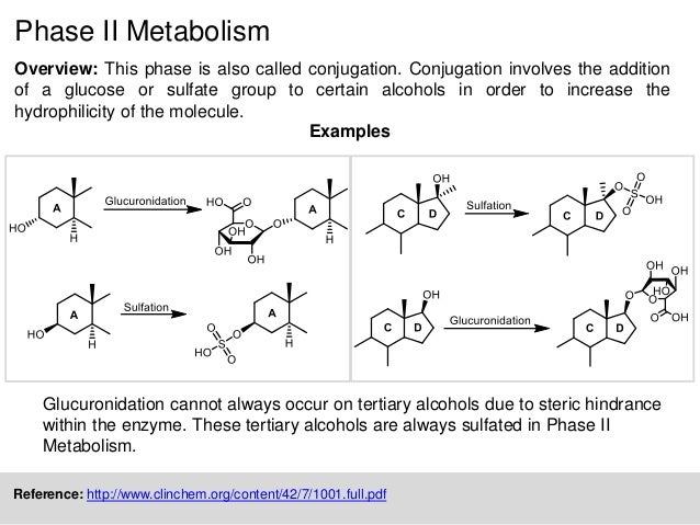 Metabolism Of Steroids