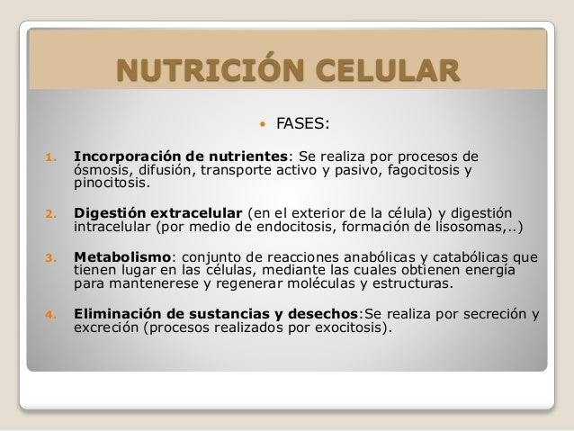 NUTRICIÓN CELULAR   FASES:  1. Incorporación de nutrientes: Se realiza por procesos de  ósmosis, difusión, transporte act...