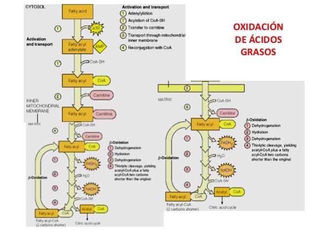Metabolismo RUTAS