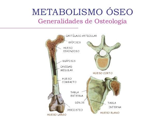 Metabolismo óseo - Calcio