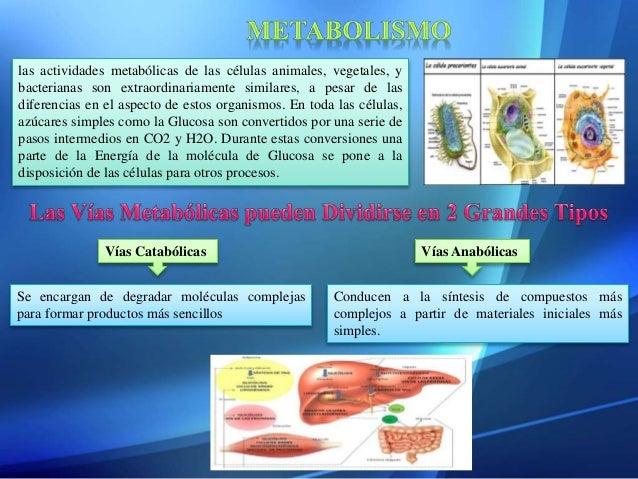 Que Tipo De Metabolismo Es La Respiracion Celular..
