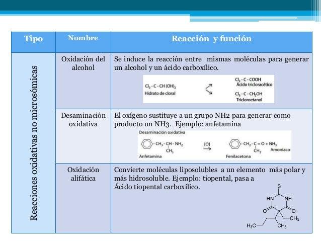 En que consiste el metabolismo basal