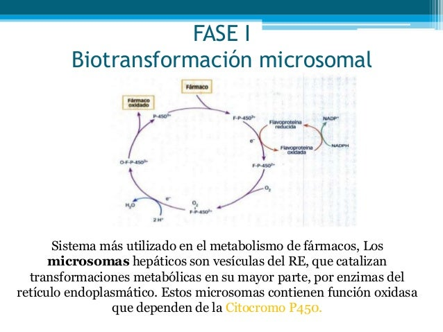 Las ideas acerca de metabolismo esquema