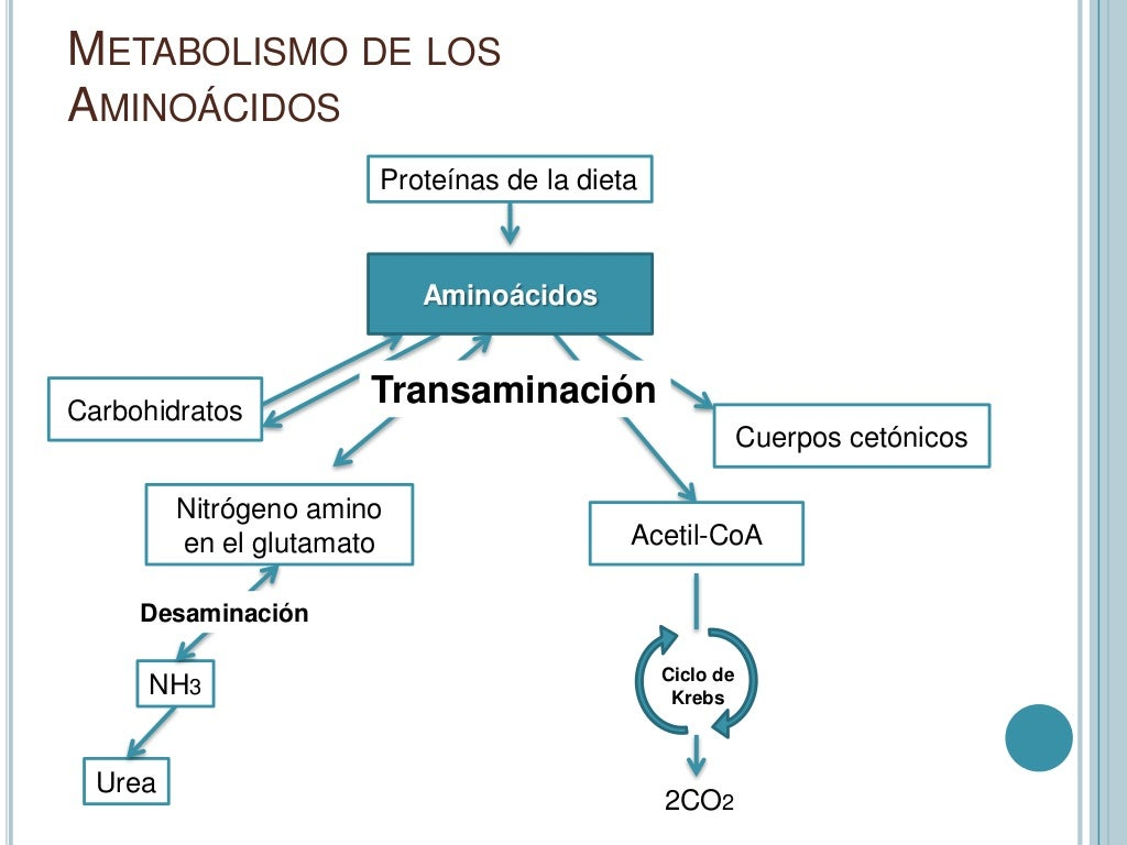 Metabolismo intermediario Presentación
