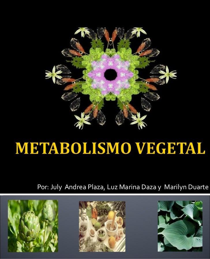 Por: July  Andrea Plaza, Luz Marina Daza y  Marilyn Duarte