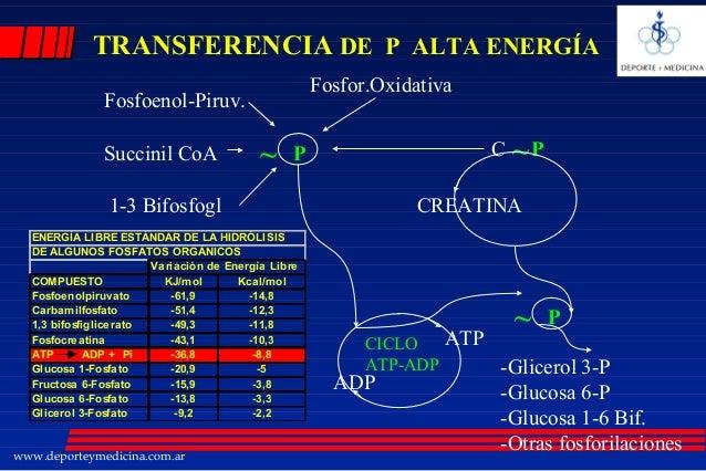 Metabolismo de la creatinina