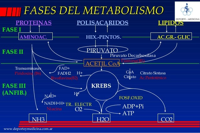Como hackear dieta del metabolismo acelerado pdf