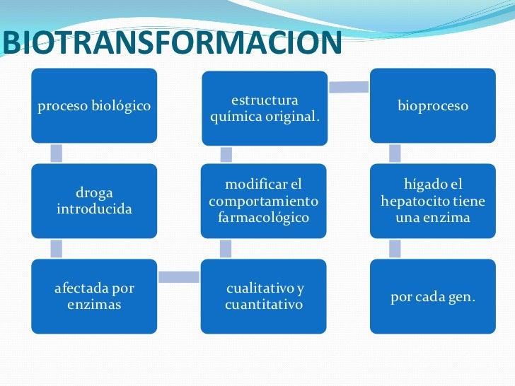 Metabolismo y eliminación del fármaco Slide 2