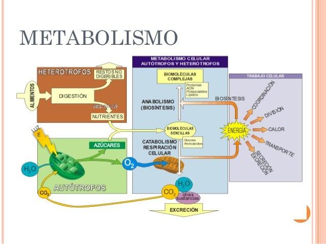 Cómo funciona comidas bajas en calorías