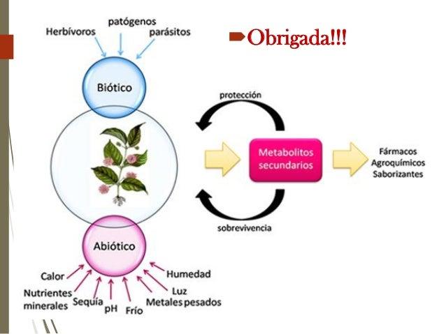 Metabolitos secundarios nas plantas