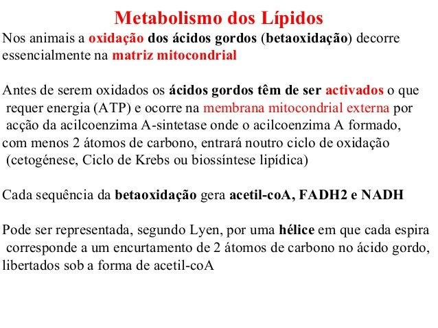 Metabolismo dos Lípidos Nos animais a oxidação dos ácidos gordos (betaoxidação) decorre essencialmente na matriz mitocondr...