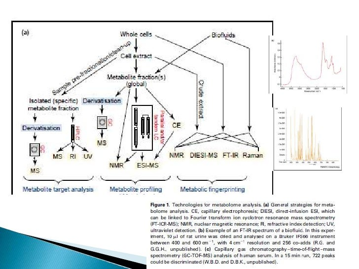    Metabolites are chemical entities and can be    analysed by the standard tools of chemical    analysis such as molecul...