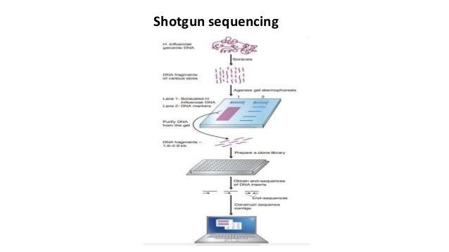 Shotgun sequencing