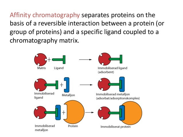 protein purification using affinity chromatography This handbook is intended for those interested in the expression and purification  of recombinant proteins the use of recombinant proteins has increased greatly.