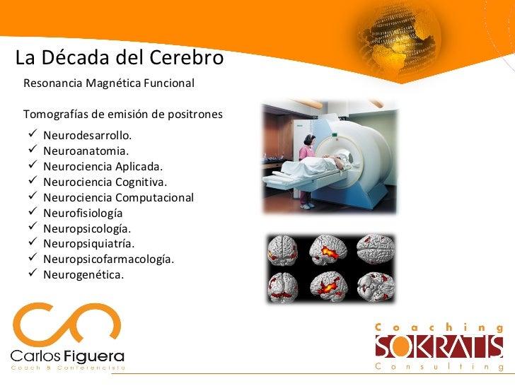 <ul><li>Neurodesarrollo. </li></ul><ul><li>Neuroanatomia. </li></ul><ul><li>Neurociencia Aplicada. </li></ul><ul><li>Neuro...