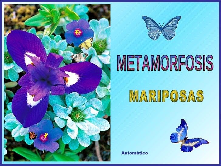 METAMORFOSIS Automático MARIPOSAS