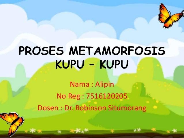 PROSES METAMORFOSIS     KUPU – KUPU           Nama : Alipin       No Reg : 7516120205  Dosen : Dr. Robinson Situmorang