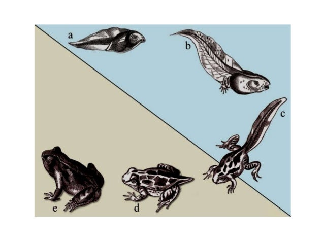 metamorfosis Slide 2