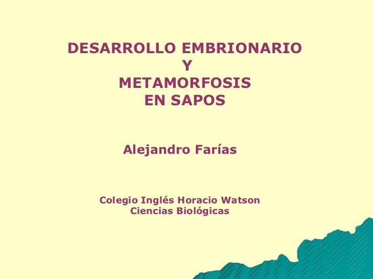 DESARROLLO EMBRIONARIO Y METAMORFOSIS  EN SAPOS Alejandro Farías Colegio Inglés Horacio Watson Ciencias Biológicas
