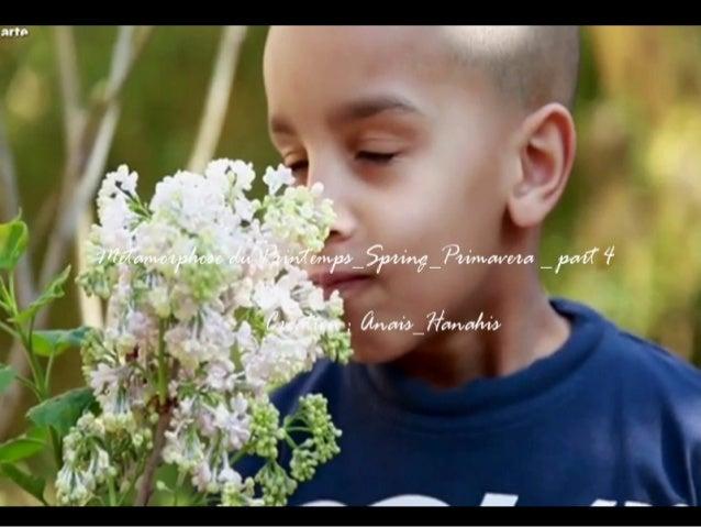 Metamorphose du printemps spring primavera _ part 4 _ by anais_hanahis