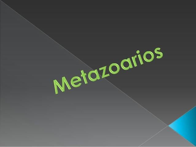 Metazoarios Slide 3