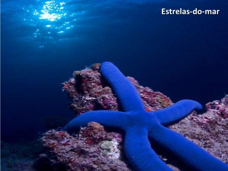 Metáfora da estrela-do-mar e da aranha Slide 2