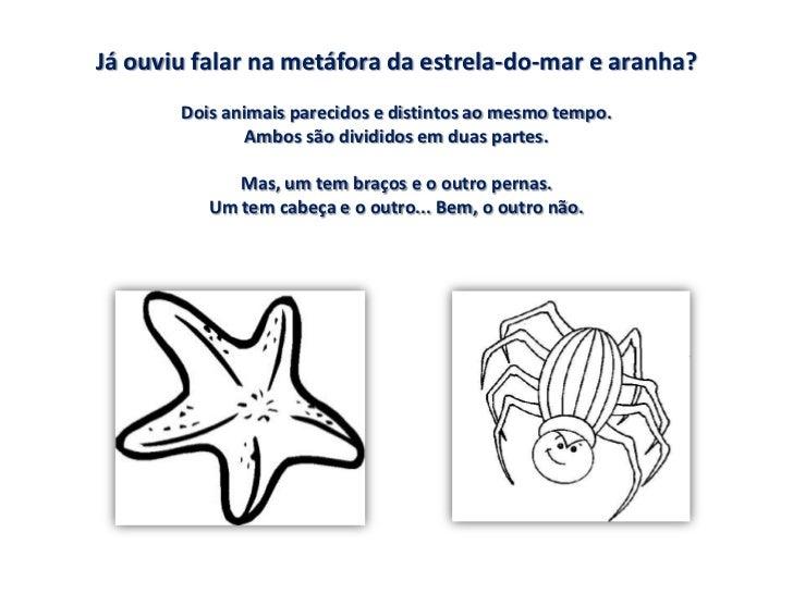 Metáfora da estrela-do-mar e da aranha Slide 3