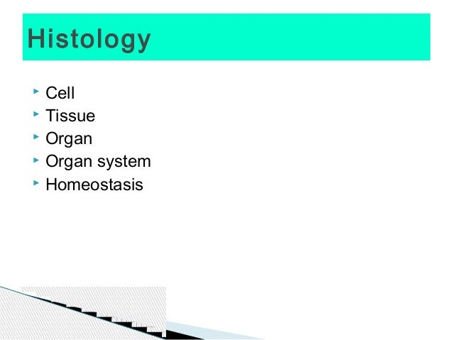 How to study for Histology   Student Doctor Network